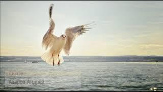 Чайка по имени Джонатан Ливингстон - Аудиокнига