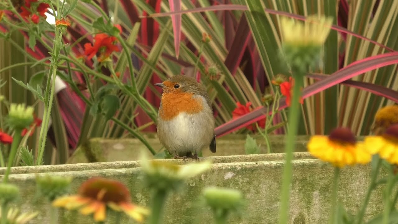 Find Out Why September Is The Best Time To Plant Bulbs Ready For A Spring Bloom