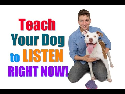 How to Get Your UNFOCUSED Dog to LISTEN to You RIGHT NOW!  ('Leave it'/'Look at Me' Combo)