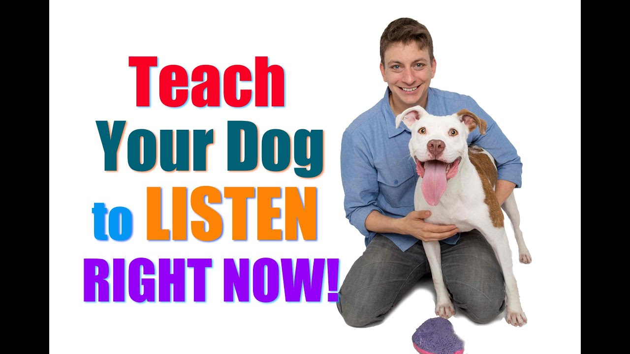 Get Your Dog to Listen Now