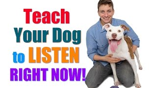 "How to Get Your UNFOCUSED Dog to LISTEN to You RIGHT NOW!  (""Leave it""/""Look at Me"" Combo)"