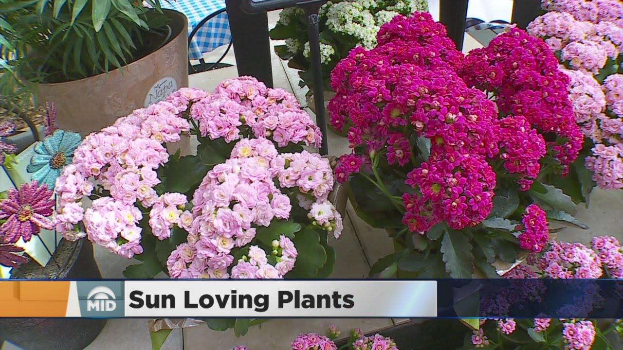 How To Use Plants In Your Yard That Thrive In Full Sun Youtube