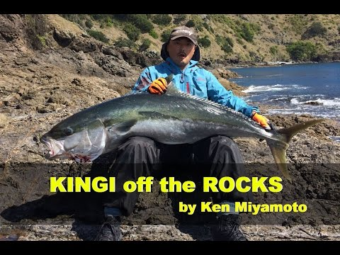 31kg KINGFISH Off The Rocks