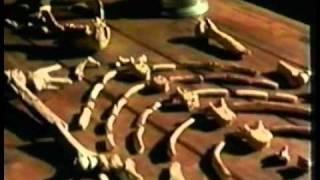 ОБМАН ЭВОЛЮЦИИ (документальный фильм)