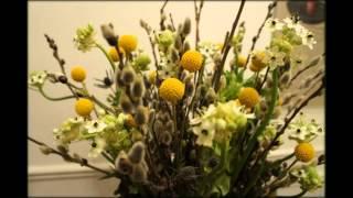 Краспедия цветы