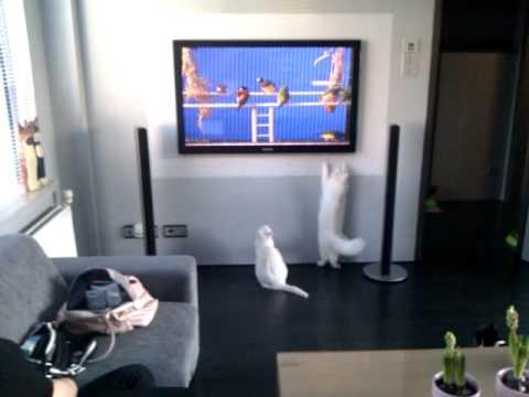 Vogels op tv.
