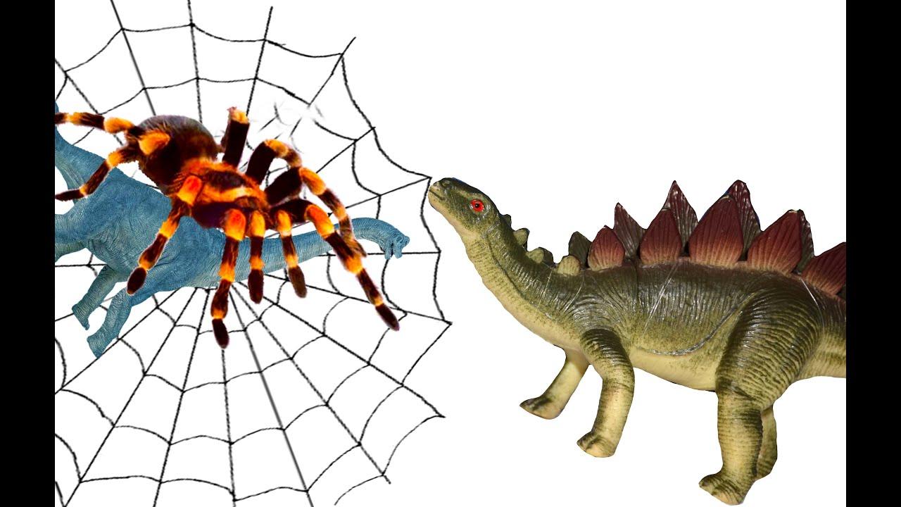 Картинку паука для детей