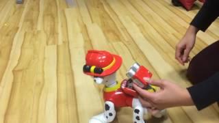 Интерактивная собака робот Zoomer Marshall Spin Master ToyWay ru