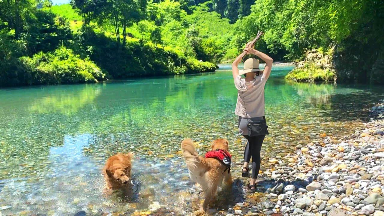 川(楽園)で大はしゃぎするワンコ達が可愛すぎるww