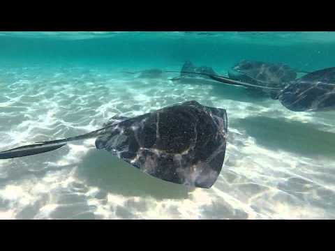 Swimming in stingray infested water - Grand Cayman