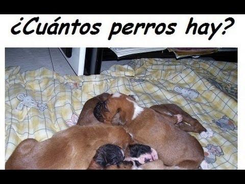 Acertijo 30 cu ntos perros hay en la imagen youtube for Cuantos codones existen