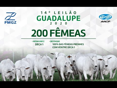 LOTE 64