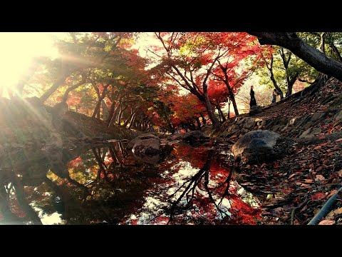 Autumn Mystical Japan