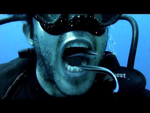 Free Underwater Dentist