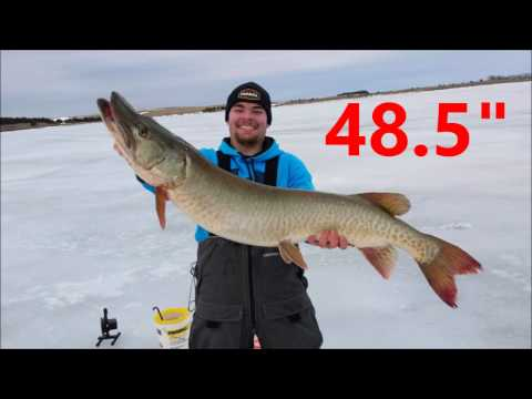 Ice Fishing For Musky: Four In One Day!