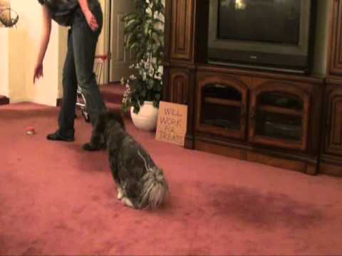 Talking Dog-  Dog Tricks by Jasmine! Ultimate Dog Tease