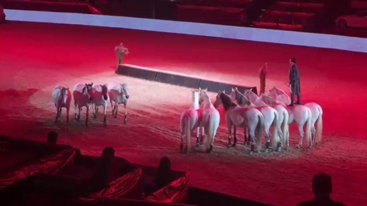 Lorenzo Amadeus Horse Indoors Salzburg Youtube