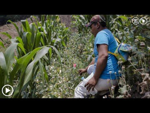 El opio mexicano nace en Guerrero