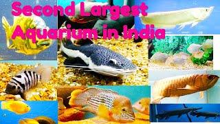 Second Largest Aquarium In India // Bangalore Aquarium // Government Aquarium // Shabna's Designs