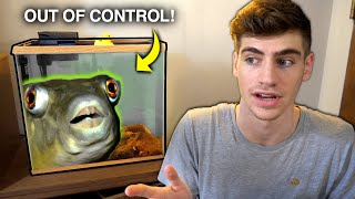 THE TRUTH ABOUT My PUFFER FISH... why it has insane teeth