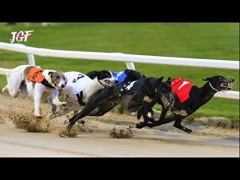 Greyhounds Track Racing - Ireland 2019