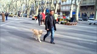jeux teduque education canine a domicile et milieu urbain dressage chiens et chiots herault