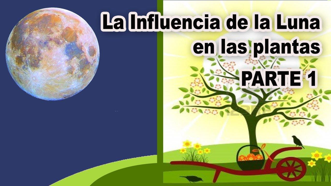 La influencia de la luna en las plantas fases lunares for Calendario lunar de hoy