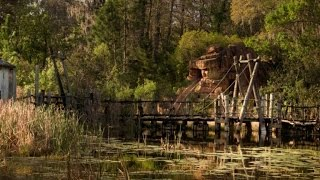 Could Disney's Closed River Country Ride Be Perfect Place for Gators to Thrive?
