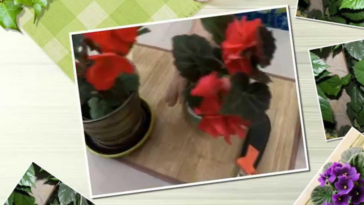 Устройство для полива цветов во время отпуска своими руками фото 119