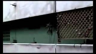 Chicoria Ztk Truceklan  -E