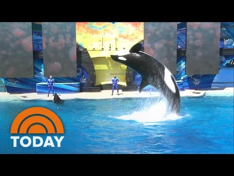 Sea World: No More Killer Whales, But What Does That Really Mean?