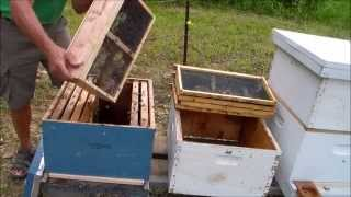 Package Bees and Bears Love Honey