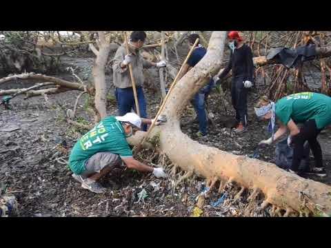 Caring for our Coastal Treasures – Restoring Mumbai's Mangroves