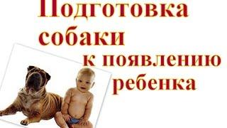 Подготовка собаки к появлению ребенка