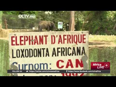 Arrival of lions in Abidjan zoo signal hope for its future