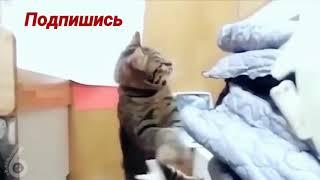 Самый высокий прыжок кота 2 метра!
