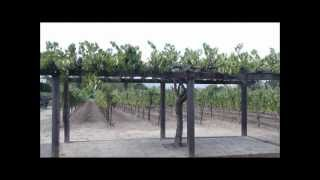 Pergola For Your Vineyard In Your Garden