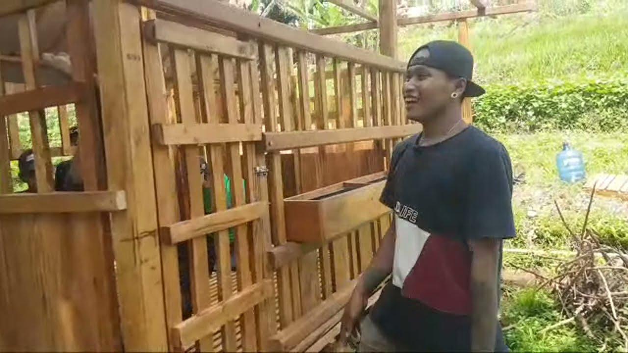 Pemasangan Kandang Model Koloni 2 Unit Di BSP Farm Bogor