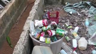 Laundry the Hard Way and a Look Around the Yard An Expat Philippine Lifestyle Video