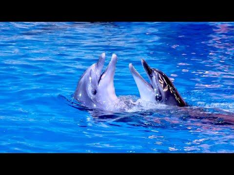 Coolest & Amazing Dolphin Show at Dubai Dolphinarium 2021 (Full Show)