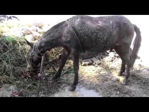 Rabies In Horse - 480×360