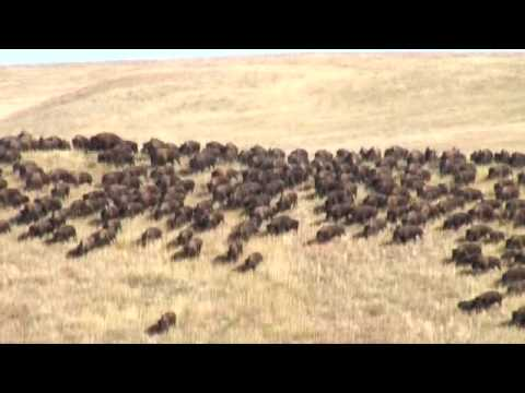 Travel South Dakota-Buffalo Round Up: South Dakota Travel Vi