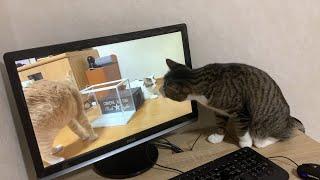 動画と現実がごっちゃになる猫