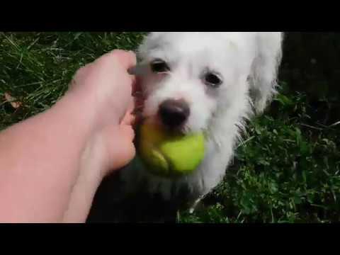 Pennsylvania Dog Rescue - ADOPTIONS - Rescue Me!
