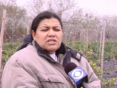Organic Farming Grows in the Valley