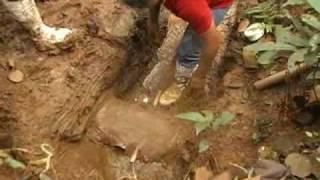 Olho D'Água - Realização Cocari e Nortox thumbnail