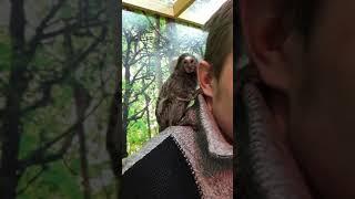 Monkey cuteness please so like