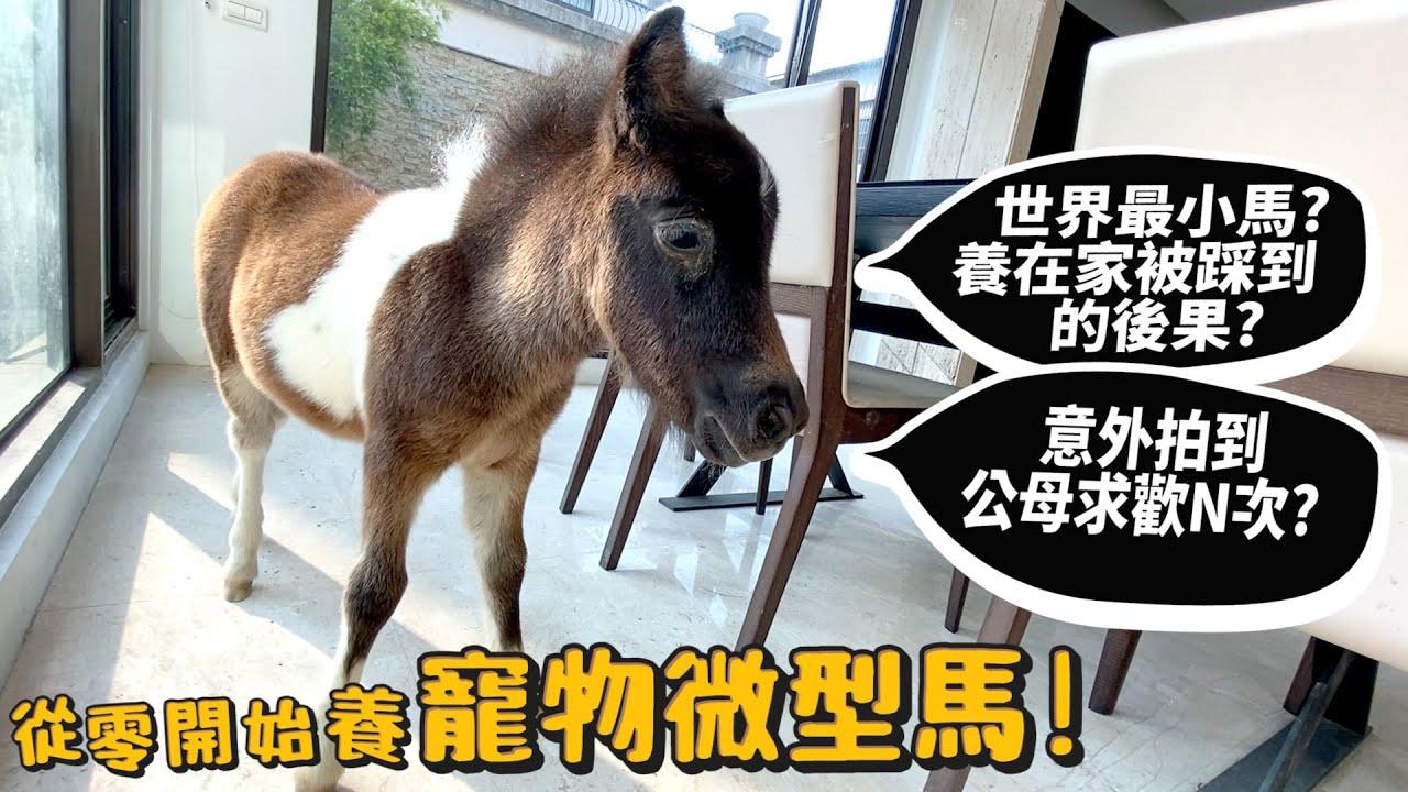 【從零開始養】微型馬!寵物!世上最小的馬!養在家的突發體驗?意外拍到公母求歡N次!【許伯簡芝】