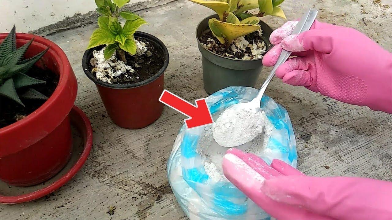 eliminar hongos tierra plantas