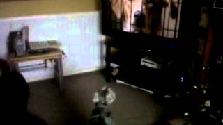 Gizmo The Miniature Schnauzer Barking At The Tv